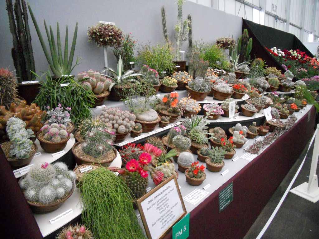Craig House Cacti
