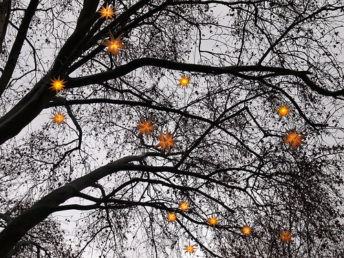 The Lights at one of Cologne's Christmas Markets: Christmas Stars / by Mararie on Flickr