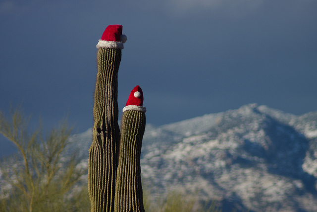 Saguaro Santa / by Megan McCormick on Flickr (CC)