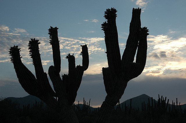 Cactus sillouette, blue sky and clouds, desert hills, twilight, outside La Paz, Baja California Sur, Mexico / by Wonderlane on Flickr