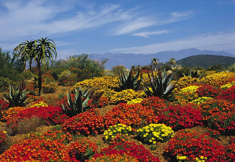 Worcester Karoo Gardens by South African Tourism on Flickr
